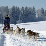 Dog sled in Jura © jura.ch