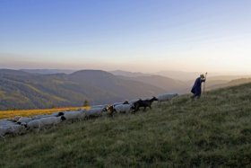 Shepherd at the Feldberg © Achim Mende, STG