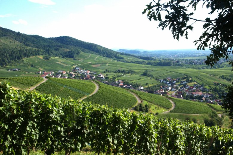 Vineyards Baden-Baden © BBt